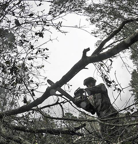 Sgt. Andrew Do, 57th Sapper Company, Combat Airborne Rough Terrain, uses chain saw to clear trees downed by Hurricane Florence on Military Ocean Terminal Sunny Point, N.C., Sept. 24, 2018. Hand saws and axes became plan B after they wore out 12 chain saws the day before clearing more than 50 trees. -U.S. Army photo by Russell Wicke