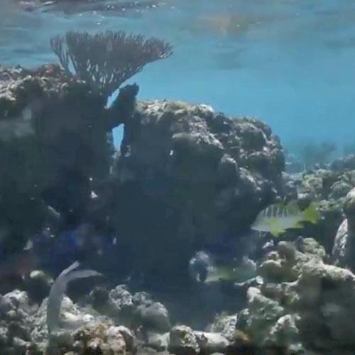 coral reef damaged by Hurricane Maria